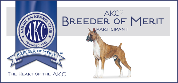 Boxer Breeder of Merit image