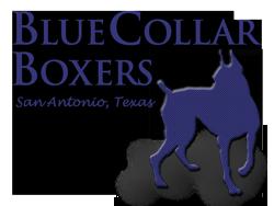 Bluecollar Boxers